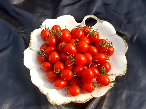 完熟ミニトマト5